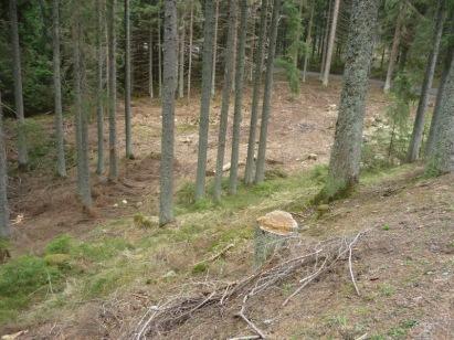 Šumava (cestou z Tříjezerní slatě na Rokytu)