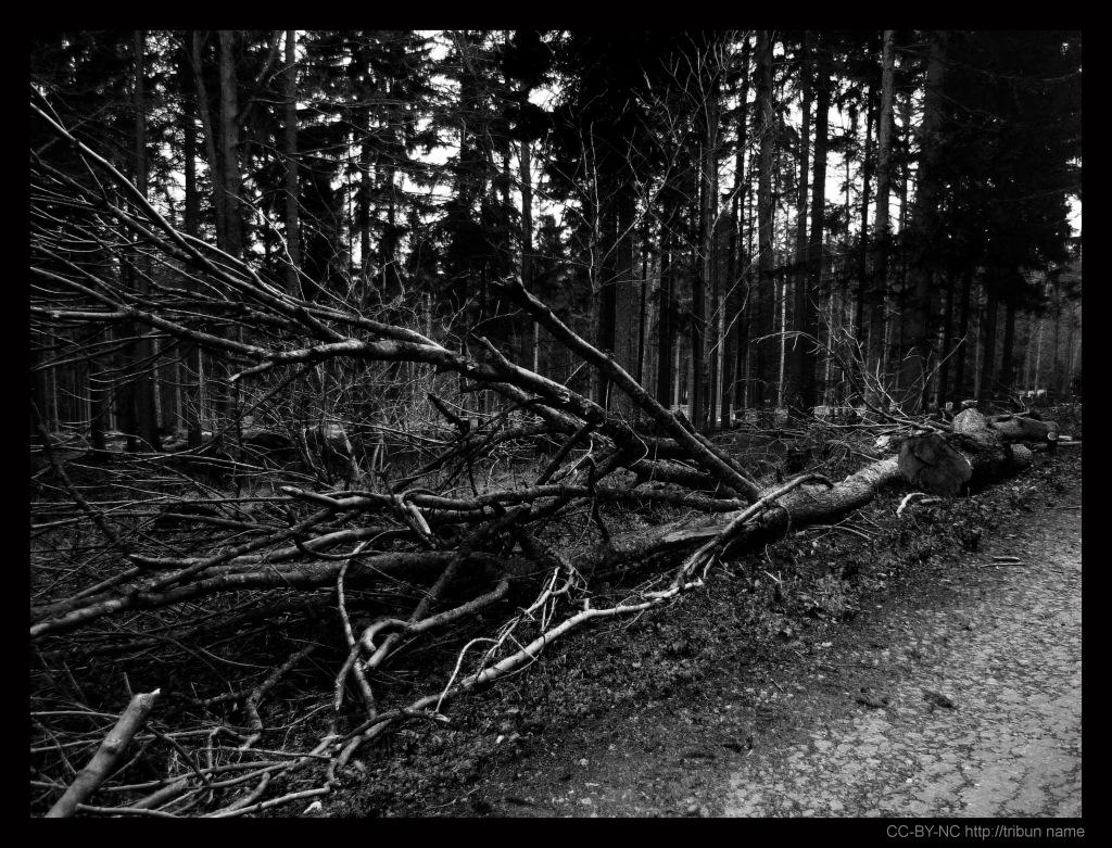Strom č. 1